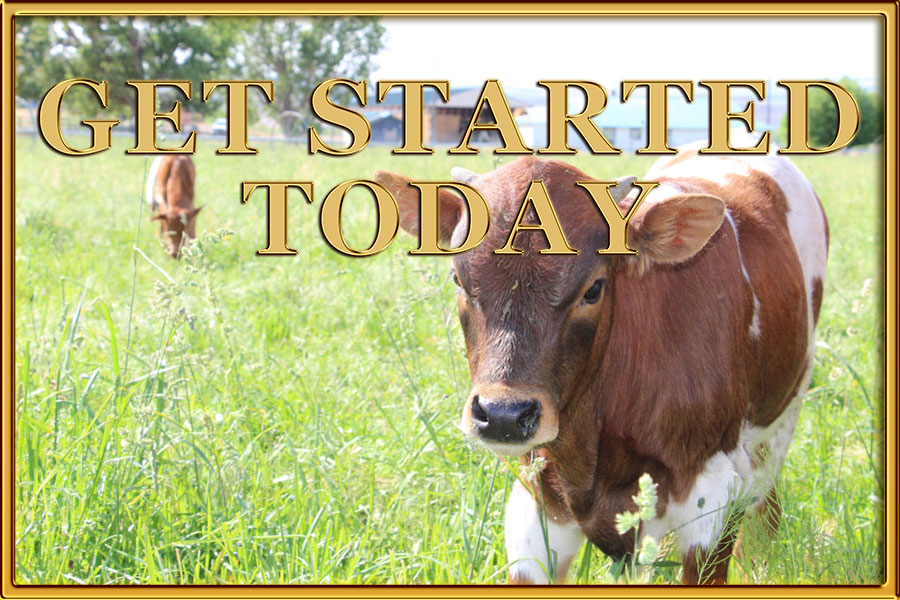 cr ranch raises registered texas longhorns in harper or